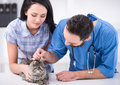 Vet young women with her cat on a visit to the Stock Image