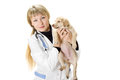 Veterinarian beautiful woman holding a puppy Royalty Free Stock Images