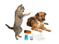 Veterinarian cat treating sick dog on white humorous image of a holding a syringe a looking distrustful isolated Royalty Free Stock Photo