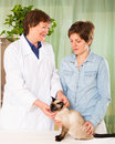 Veterinarian checking the health of cat Royalty Free Stock Photo