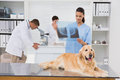 Veterinarian coworker examining dogs x ray in medical office Stock Photos