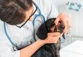 Veterinarian examines teeth of a dog