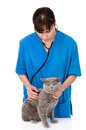 Veterinarian examining a cat. isolated on white background