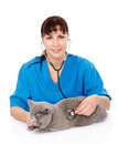 Veterinarian examining a cat. on white background