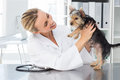 Veterinarian examining dog female in clinic Stock Images