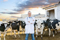 Veterinarian at  farm cattle Royalty Free Stock Photo