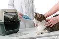 Veterinarian giving cat health record Royalty Free Stock Photo
