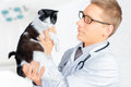 Veterinarian looks on a feline male doctor in glasses cat in hospital Stock Photography