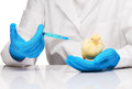 Veterinarian makes injection to yellow chicken with syringe Royalty Free Stock Photo