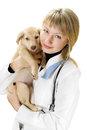 Veterinarian and puppy hugs cute red Stock Photos