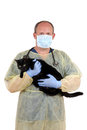 Veterinarian taking cat to surgery Royalty Free Stock Photography