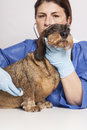 Veterinarian woman with Dog Royalty Free Stock Photo