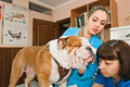Veterinarians inspects bulldog in veterinary station Royalty Free Stock Photos