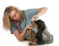 Veterinary care Royalty Free Stock Photography