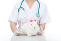 Veterinary care concept with cute white rabbit Royalty Free Stock Photo