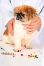 Veterinary concept. Stock Photography