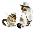 Veterinary concept, funny chipmunk  and cat with phonendoscope a Royalty Free Stock Photo