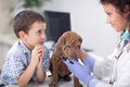 Veterinary examine Shar Pei dog ,young boy looking Royalty Free Stock Photo