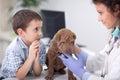Veterinary examine Shar Pei dog ,young boy looking Royalty Free Stock Photo