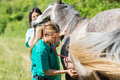 Veterinary on a farm great performing scan to young mare Royalty Free Stock Photo