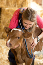 Veterinary on a farm performing physical examination in cow Stock Images