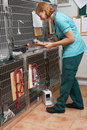 Veterinary nurse checking on animals in cages at vets Stock Photo