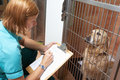 Veterinary nurse checking on dog in cage at vets Stock Image