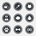 Veterinary, pets icons. Paw, syringe and bone. Royalty Free Stock Photo