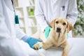 Veterinary Surgeon Treating Dog In Surgery Royalty Free Stock Photo