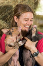 Veterinary with two pigs laughing after conducting an examination on the farm Royalty Free Stock Photos