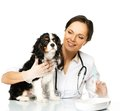 Veterinary woman with spaniel young brunette holding syringe Royalty Free Stock Image