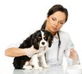 Veterinary woman with spaniel young brunette holding syringe Stock Photography
