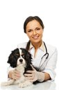 Veterinary woman with spaniel young positive brunette Royalty Free Stock Image