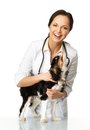 Veterinary woman with spaniel young positive brunette Stock Photos
