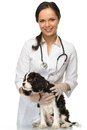 Veterinary woman with spaniel young positive brunette Stock Images