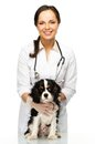 Veterinary woman with spaniel young positive brunette Royalty Free Stock Photos