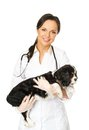 Veterinary woman with spaniel young positive brunette Stock Image
