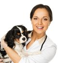 Veterinary woman with spaniel young positive brunette Stock Photo