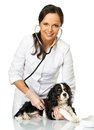 Veterinary woman with spaniel young positive brunette holding wounded leg Royalty Free Stock Images