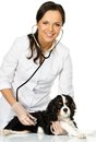 Veterinary woman with spaniel young positive brunette holding wounded leg Royalty Free Stock Photos