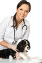 Veterinary woman with spaniel young positive brunette holding wounded leg Royalty Free Stock Photography