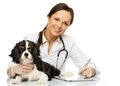 Veterinary woman with spaniel young positive brunette taking notes on tablet pc Stock Photo