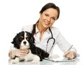 Veterinary woman with spaniel young positive brunette taking notes on tablet pc Royalty Free Stock Photo