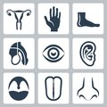 Vetor organs icons set external and reproductive system Stock Images