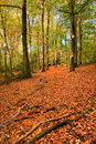 Vibrant Autumn Fall forest landscape image Royalty Free Stock Photo