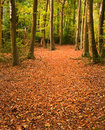 Vibrant Autumn Fall forest landscape image Stock Photo
