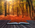 Vibrant Autumn Fall forest landscape image in pages of book Royalty Free Stock Photo