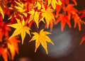 Vibrant autumn forest in japan Stock Photos