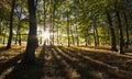 Vibrant backlit woodland Royalty Free Stock Photo