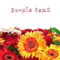 Vibrant Colorful Daisy Gerbera Flowers Royalty Free Stock Photography